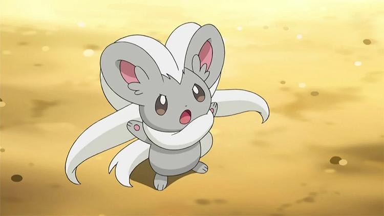 Minccino Pokemon anime screenshot