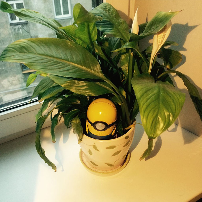 Plant watering minion