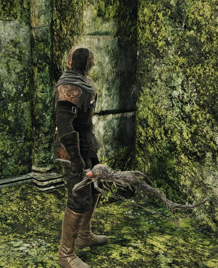 Spider Fang Dark Souls 2 screenshot