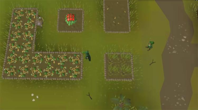 Strawberry Farming Screenshot in OSRS