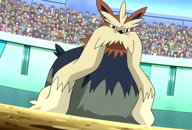Stoutland Pokemon in the anime