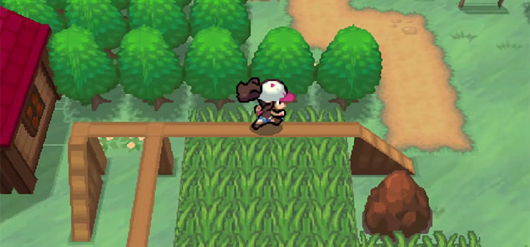 Best Grinding Spots For Leveling in Pokémon Black & White