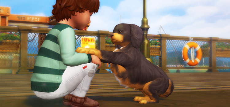 Sims 4 Pose / Toddler Boy with Pet Puppy