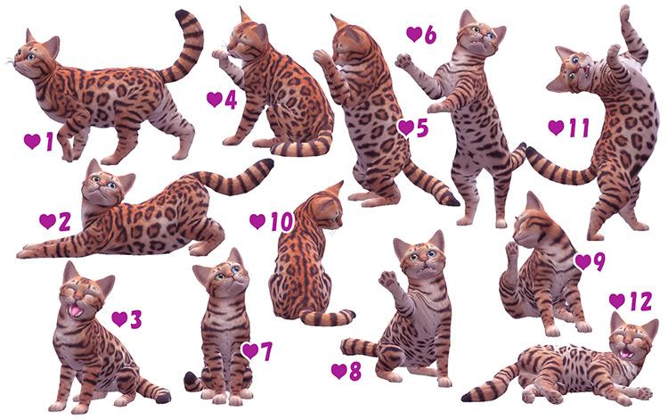 Cat & Kitten Poses / TS4 CC