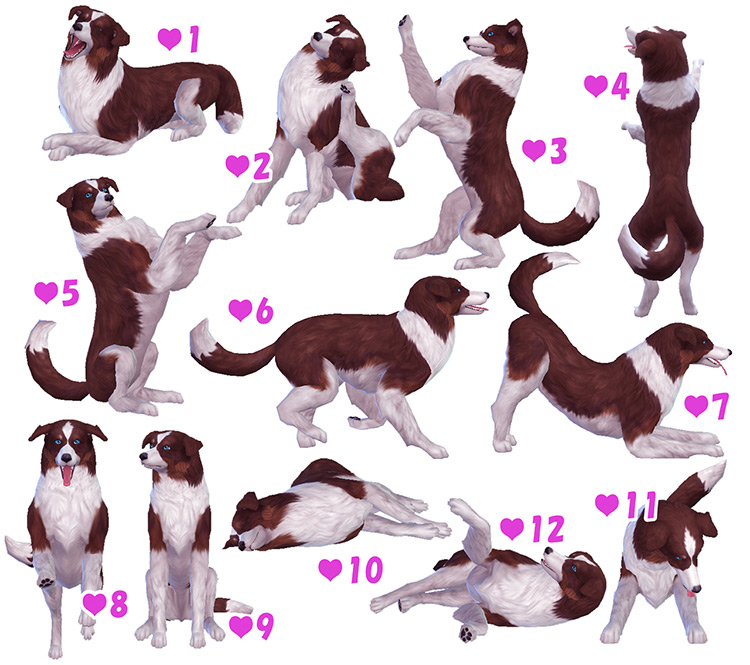 Dog Pose Pack (Large, Small, Puppy) for The Sims 4