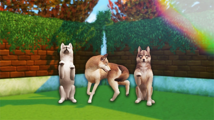 Random Dog Trick Poses / Sims 4 CC