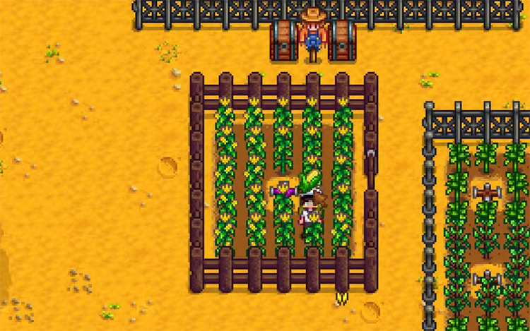 Corn Stardew Valley gameplay