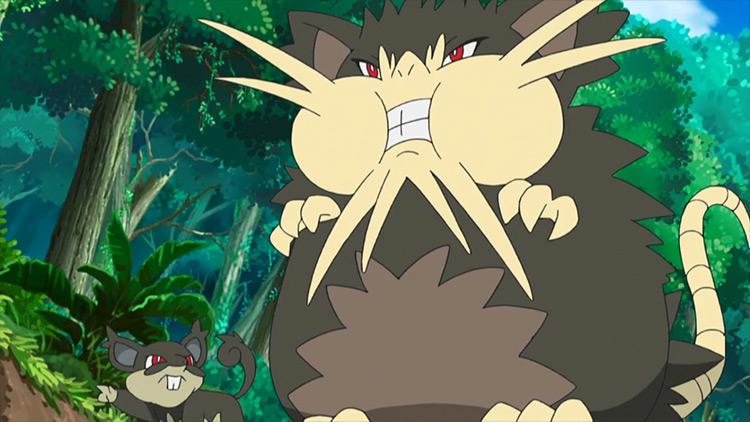 Alolan Raticate Pokémon anime