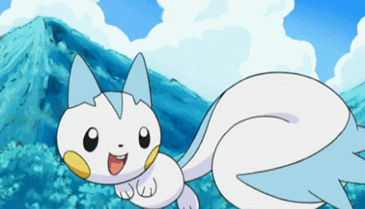 Pachirisu in the anime