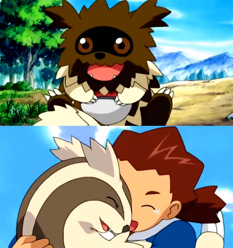 Zigzagoon and Linoone - Pokémon anime screenshot