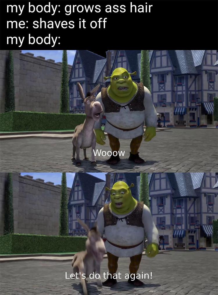 Donkey, wow lets do that again meme