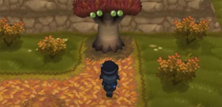 Berry Bush in Pokemon X