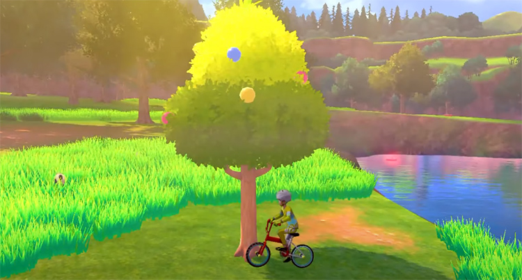 Big Berry Tree in Pokemon SwSh