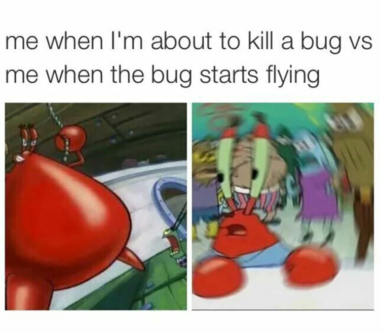 Me about to kill a bug - confused krabs meme