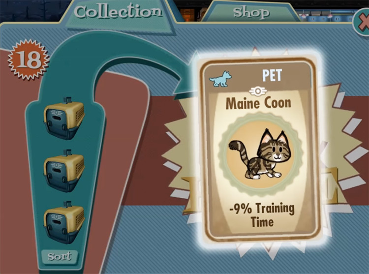Bangor – Maine Coon from Fallout Shelter
