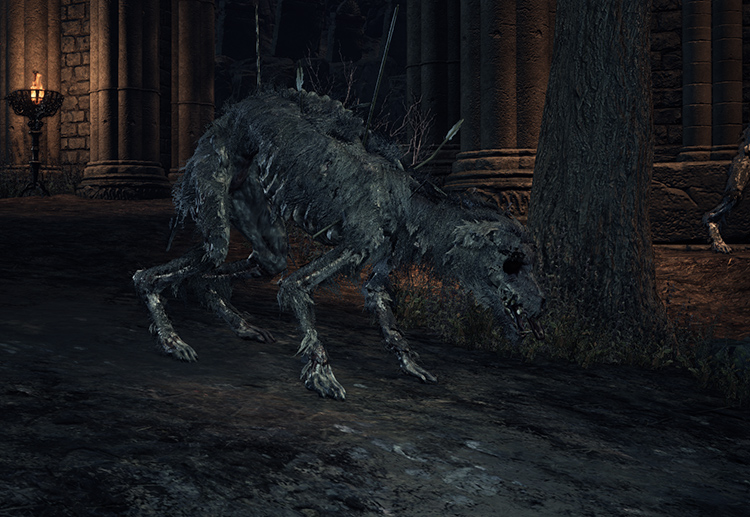 Starved Hound in Dark Souls 3