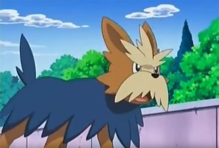 Herdier dog from Pokemon anime