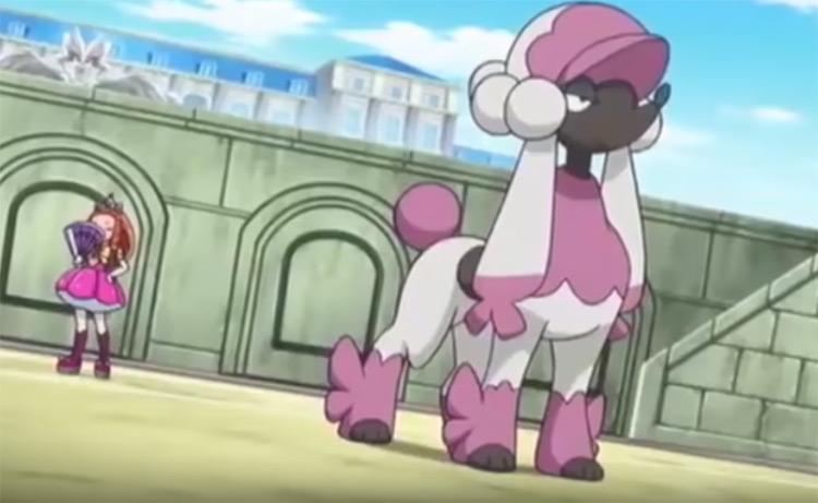 Furfrou Pokemon in the anime
