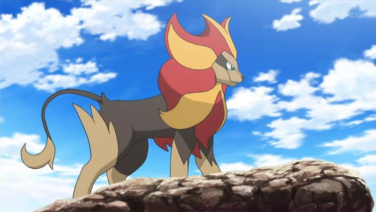 Pyroar in the anime