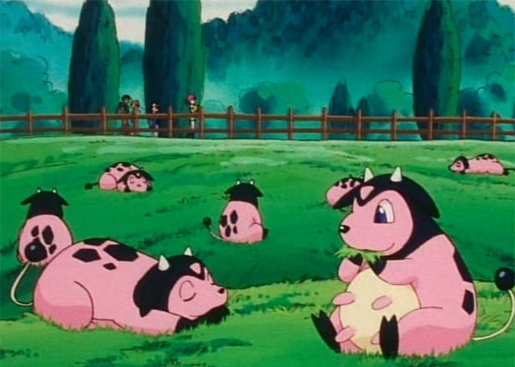 Miltank in the anime